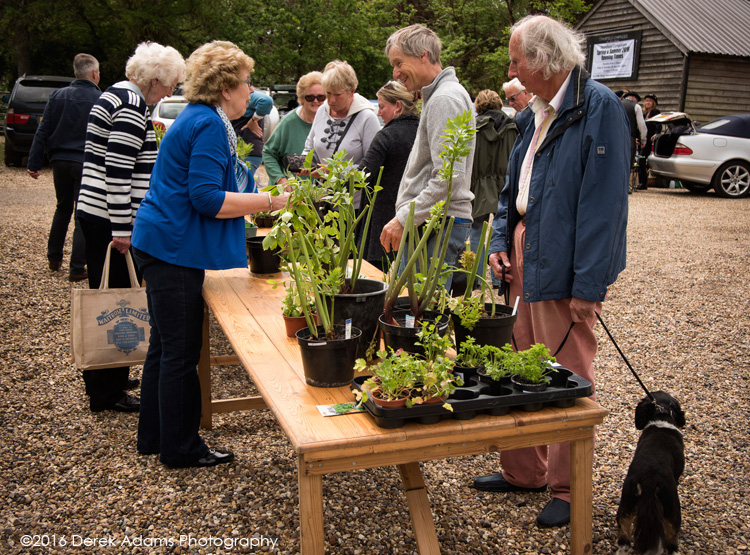 plant sale Stansfield